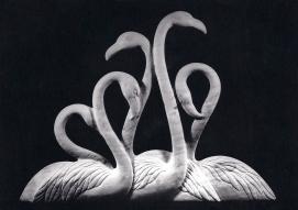 Five Flamingos by Maureen Morris